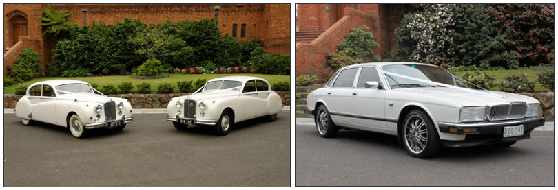White Classic Jags - Our Cars